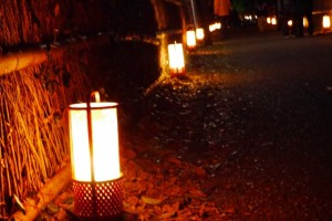 嵐山 ライトアップ  竹林