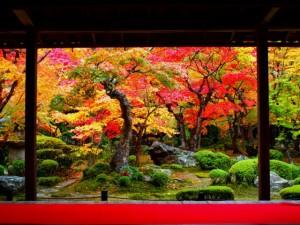 京都の紅葉 混雑