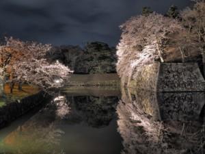彦根城 桜 駐車場