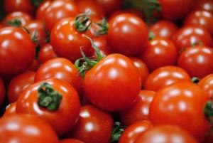 ミニトマト 苗 植える時期